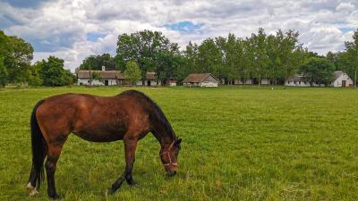 gabonamúzeum ló